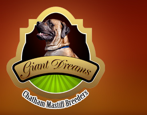 Giant Dreams Mastiff Dog Breeders in Chatham-Kent Ontario